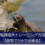 亀頭増大トレーニング