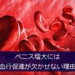 血流改善とペニス