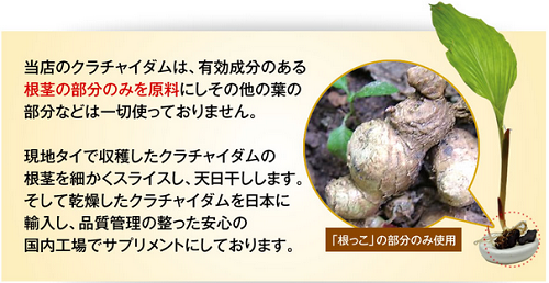 黒ジンジャーの根茎