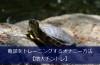 亀頭をトレーニングするオナニー方法【増大チントレ】